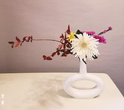 20201111紅葉ブルーベリー白菊自由花