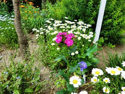 フローラルタウン内庭初夏