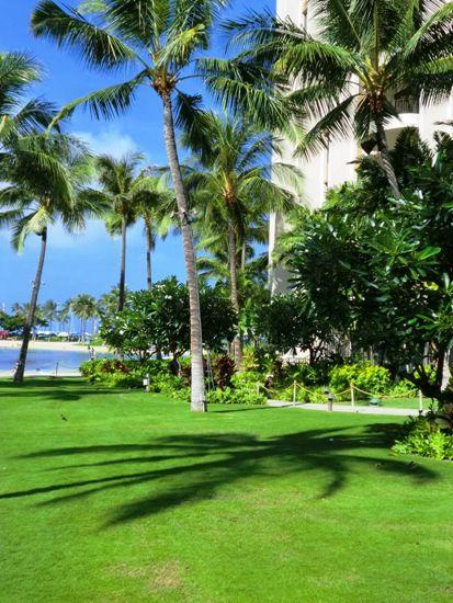 ハワイやしと影CIMG5944縮小版