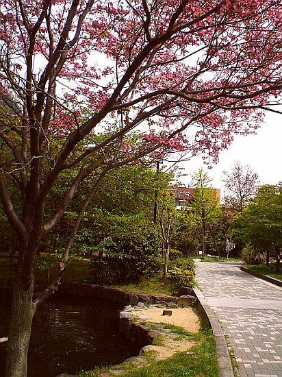 淀川駅遊歩道ハナミズキ