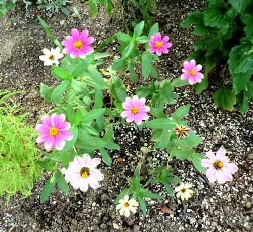 フローラルタウン内花壇の花