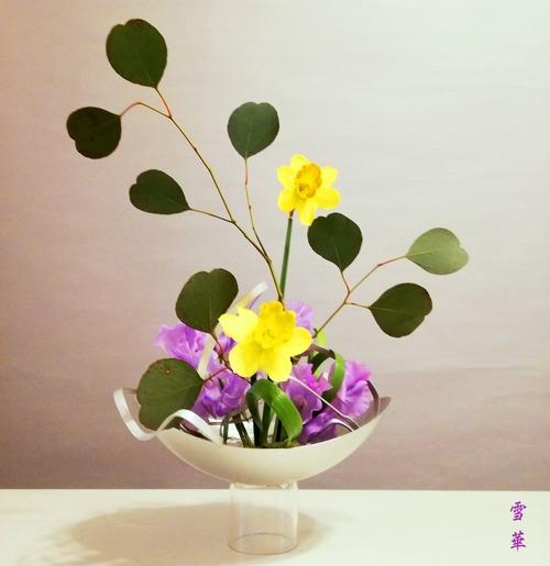 20200122ラッパ水仙自由花
