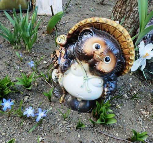 花壇の青のハナニラ2