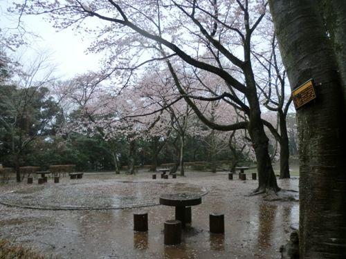 里見公園雨の中