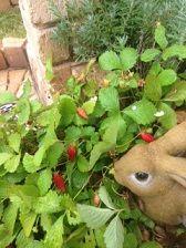 IMG_1896イチゴとウサギ