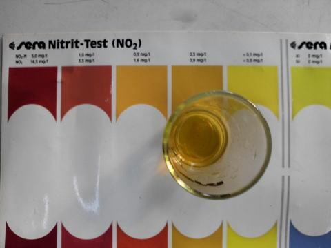 亜硝酸テスト