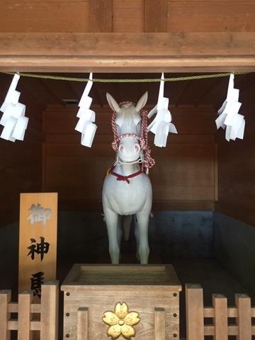 201906016_冨士浅間神社神馬