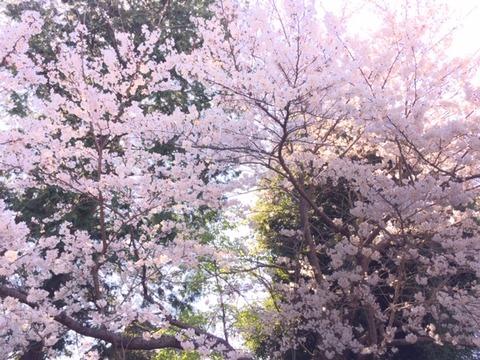 20190404_桜