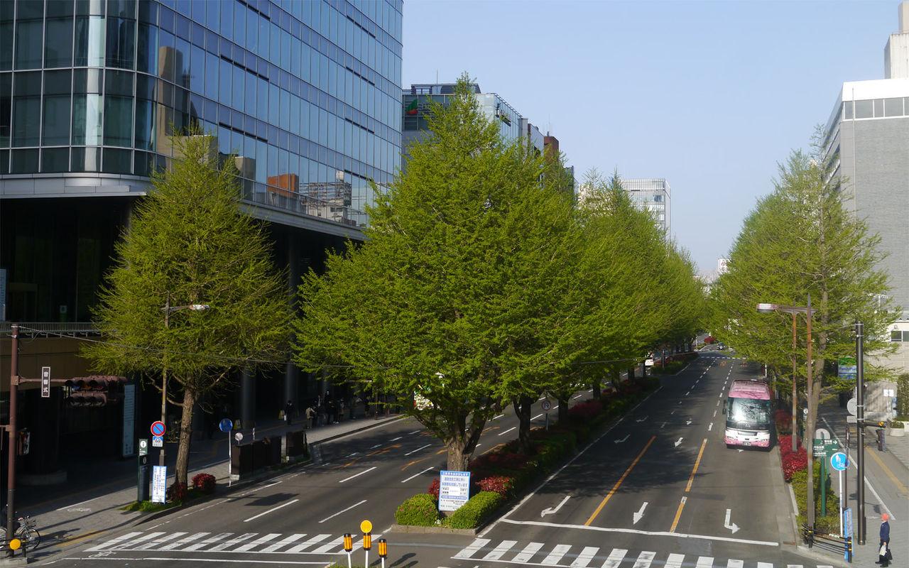 広瀬通りイチョウ伐採説明会は10月27日と29日! : 仙台にパンダは ...