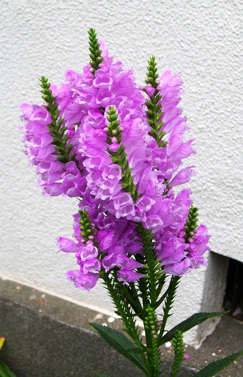 花の画像 p1_33
