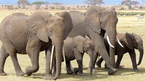 elephant-720838_1920