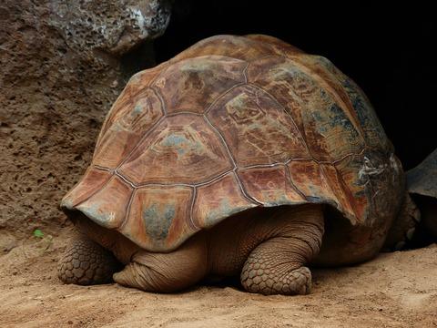 turtle-406977_1920