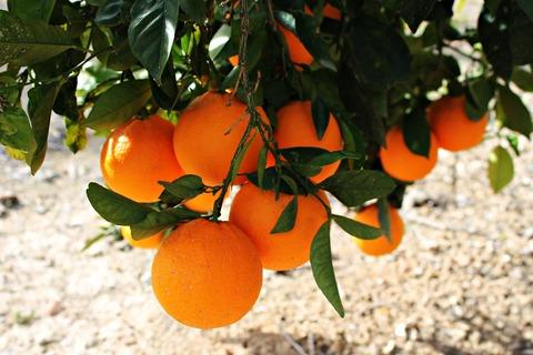 oranges-614154_1920