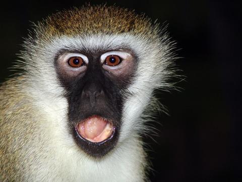 monkey-1029089_1920