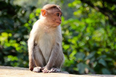 monkey-1028659_1920