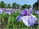 晴れやかな空と花々と