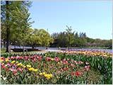 暖かい4月の水元公園