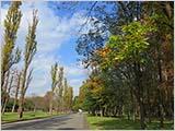樹々が色づく水元公園