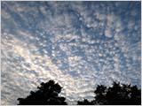 秋のいわし雲