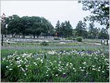 夕方の水元公園