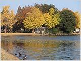 水元公園の彩り