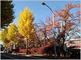 秋の小布施