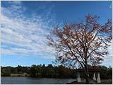 秋の空と紅葉と