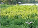 緑の水元公園