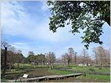 早春の水元公園