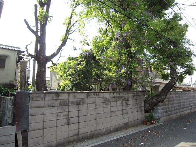 Images of 畠山政久 - JapaneseC...