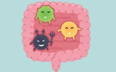 【朗報】ワイくん、『腸内細菌』を意識し出してからとんでもなく体調が良くなり歓喜