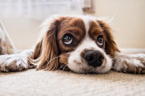 13年11ヶ月連れ添った犬を安楽死させてきた