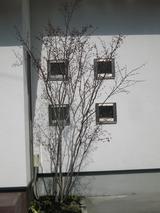 福山K様邸 シンボルツリー