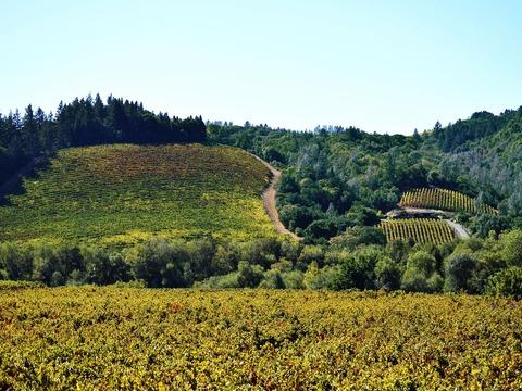 Ngày 4: Lấy mẫu rượu vang Sonoma Valley