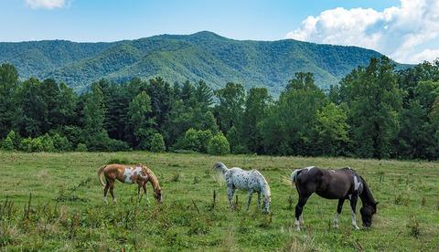 oky-mountains-national-park.web