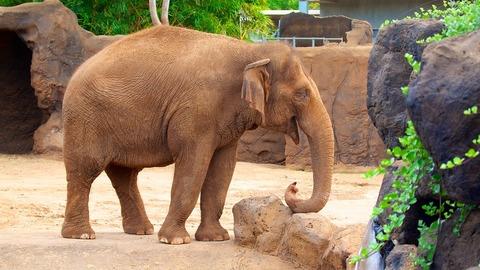 Sở thú Honolulu: Honolulu, Oahu