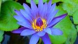 タイ写真1_161228_0059