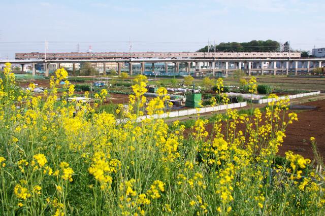 205系20200421西浦和-北朝霞(菜の花)7