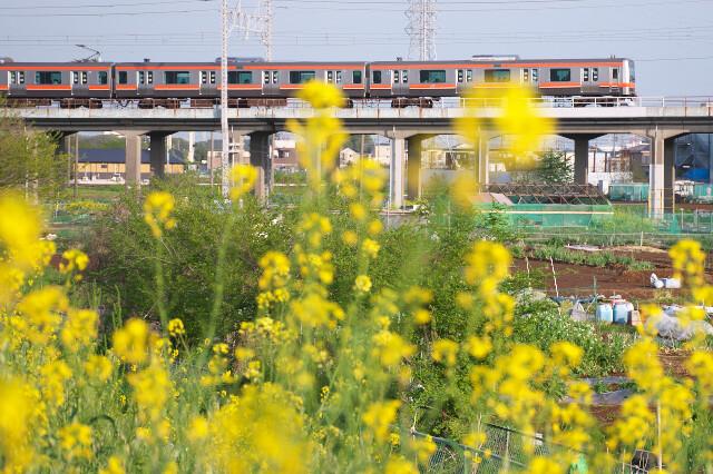 E231系20200421西浦和-北朝霞(菜の花)2
