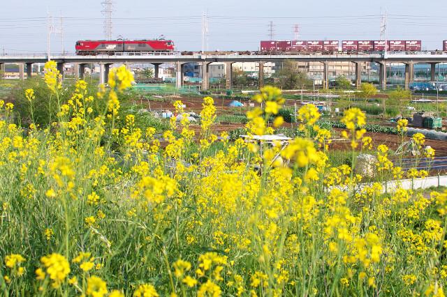 EH500-54+貨物20200421西浦和-北朝霞(菜の花)8