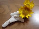 お花をつけてみた