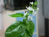 バジルの花