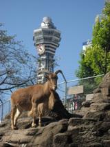 天王寺動物園06