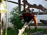 天王寺動物園09