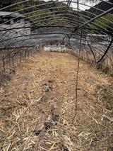 本日の瀬戸川近辺 とりま草刈り