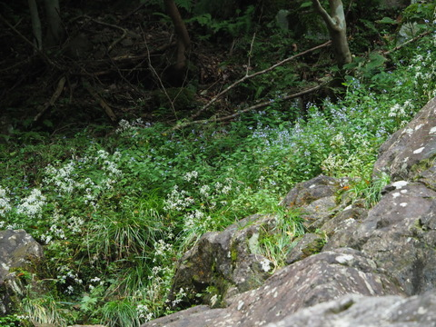 daimonjiso201012121