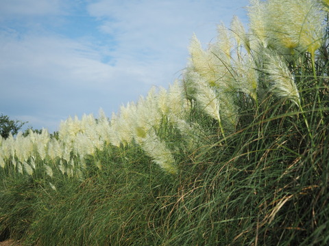 panpasgrass19082138