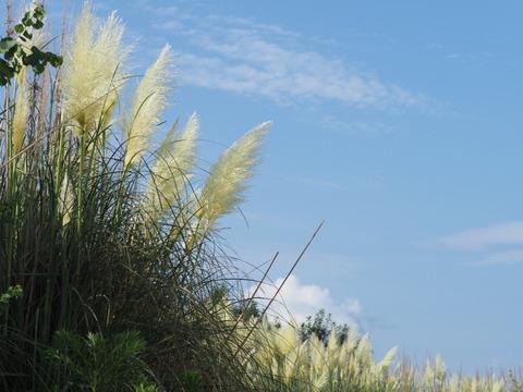 panpasgrass17081914