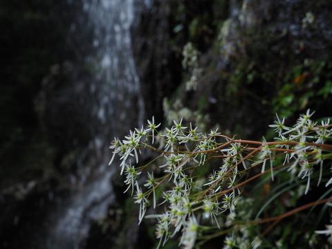 daimonjiso201012055