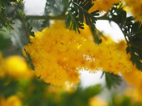 mimoza19022203